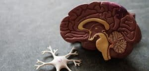 do-they-really-work-memory-boosters